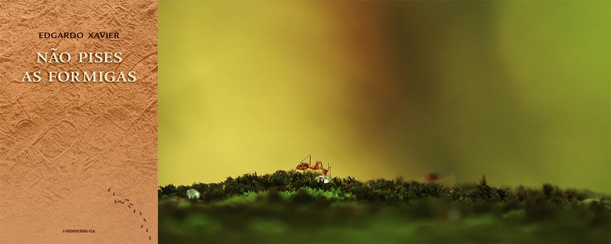 edgardo-xavier-formiga